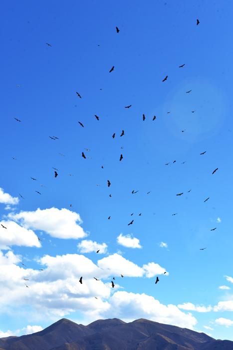 最後の先、鳥葬という旅