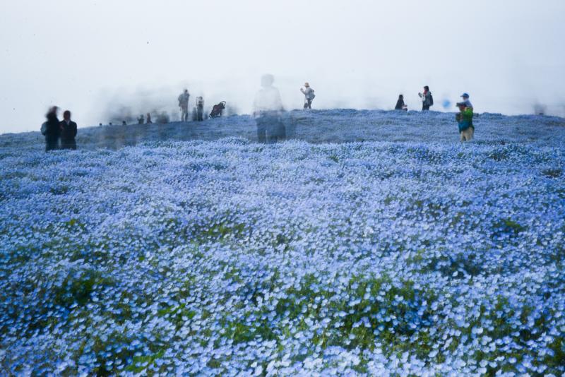 ネモフィラの丘、あるいは黄泉比良坂