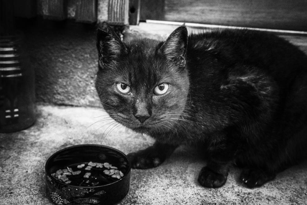冬のチャイや黒のネコ