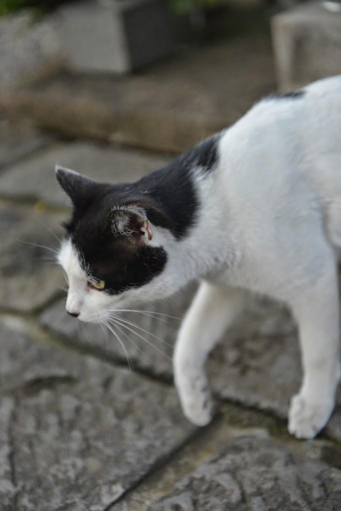 ポイントウエザーの求人と猫