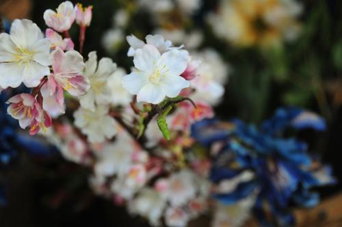 綱島の花は何度でも咲く