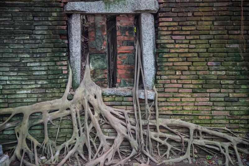 空に根を張る。ガジュマルのある風景01、台南