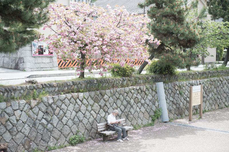 春の落ち葉 吉田亮人さんとfalling leaves