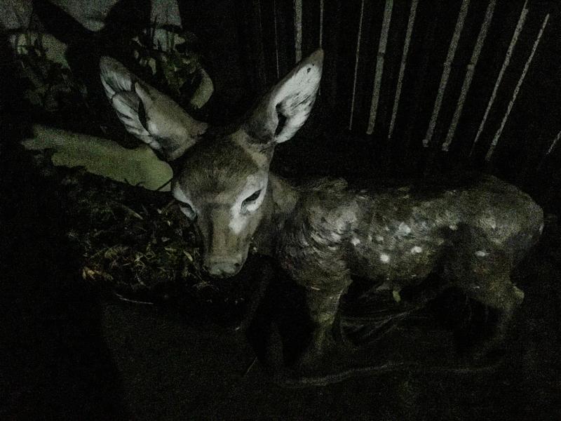 夜鹿に慄く