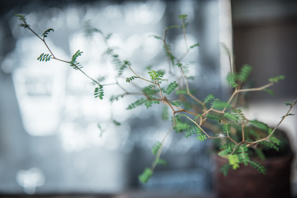 植物の記憶、時間